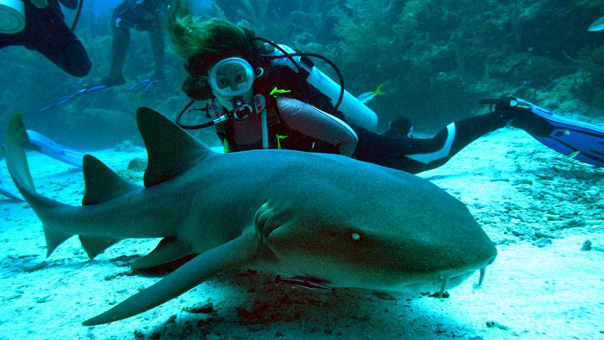 buceadores junto a un tiburon gata o nodriza en Mahahual