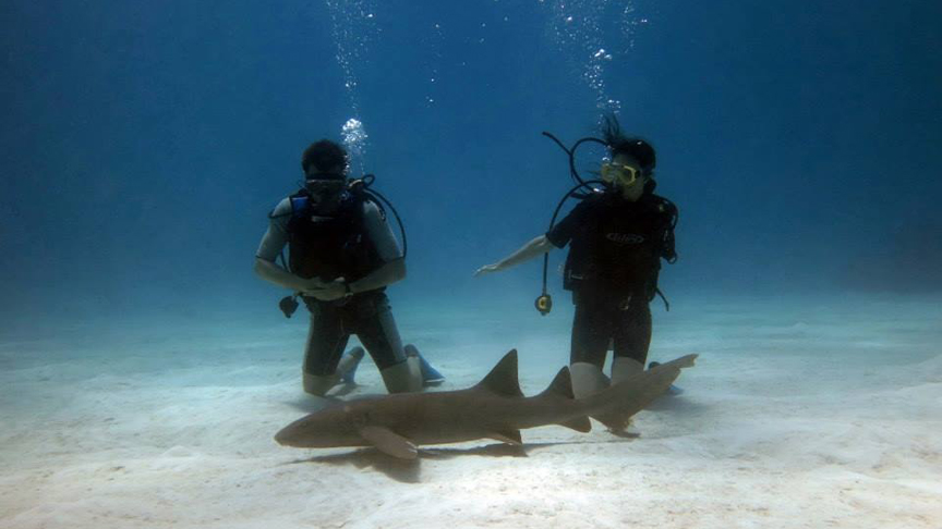 buzos con tiburon gata en Chinchorro