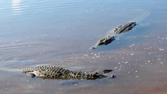 cocodrilos-amanecer