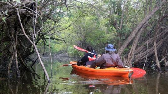 kayak-manglares