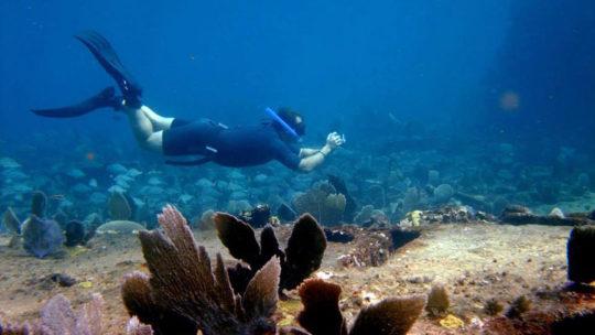 snorkel-corales-mahahual