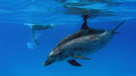snorkel-delfines-chinchorro