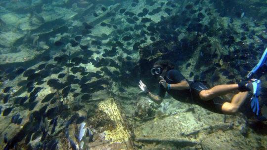 snorkel-punta-herrero