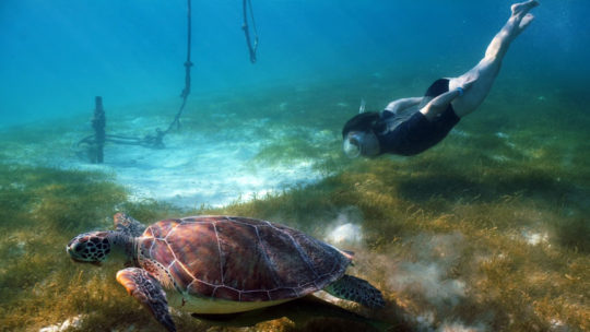 snorkel-tortuga-mahahual