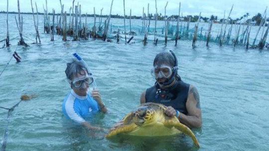 tortuga-punta-herrero