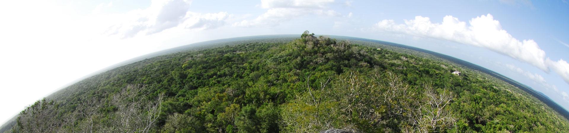 vista desde la piramide de Calakmul