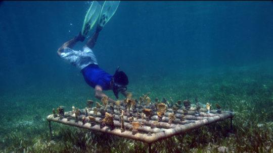 4-recuperacion-corales