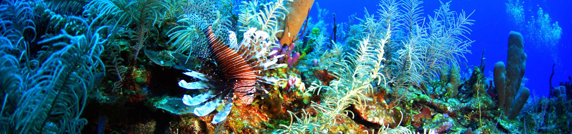 esponjas, corales y plumas de mar en el arrecife de mahahual