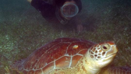 snorkel-en-mahahual